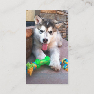 Alaskan Malamute Puppy With Colorful Chew Toy Business Card