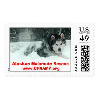 Alaskan Malamute Rescue Postage Stamp