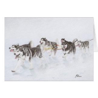 Alaskan Malamute team running through snow Card