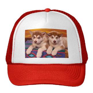Alaskan Malamutes Hats