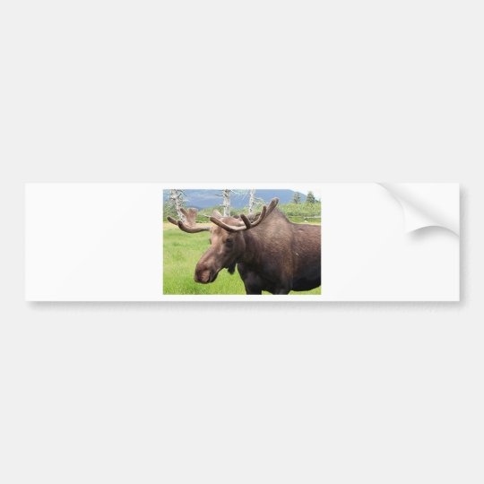 Alaskan Moose Bumper Sticker