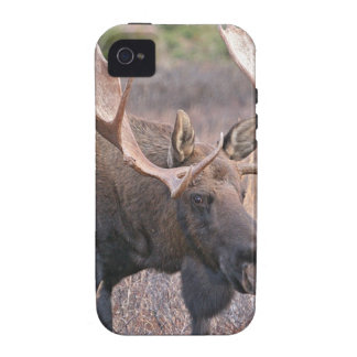 Alaskan Moose Case For The iPhone 4