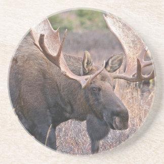 Alaskan Moose Drink Coaster