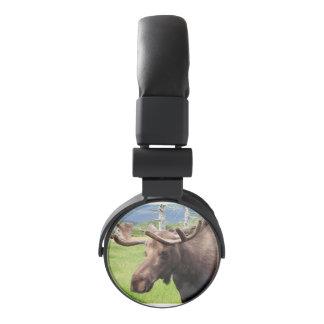 Alaskan moose headphones