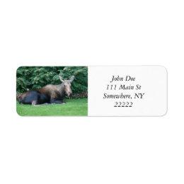 Alaskan Moose Label