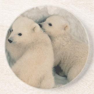 Alaskan Polar Bear Cubs Coaster