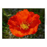 Alaskan Red Poppy Colorful Flower Card