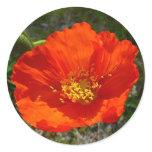 Alaskan Red Poppy Colorful Flower Classic Round Sticker