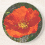 Alaskan Red Poppy Colorful Flower Drink Coaster