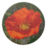 Alaskan Red Poppy Colorful Flower Eraser