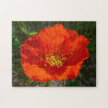 Alaskan Red Poppy Colorful Flower Jigsaw Puzzle