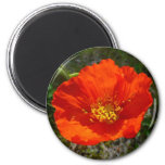 Alaskan Red Poppy Colorful Flower Magnet