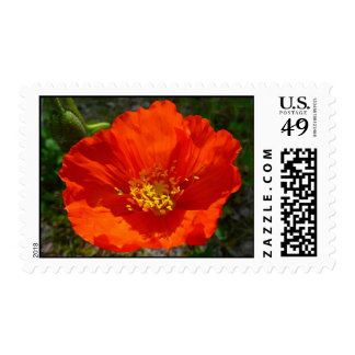 Alaskan Red Poppy Colorful Flower Postage