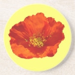 Alaskan Red Poppy Colorful Flower Sandstone Coaster