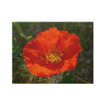 Alaskan Red Poppy Colorful Flower Wood Poster