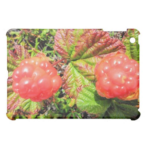 alaskan salmon berries iPad mini cover