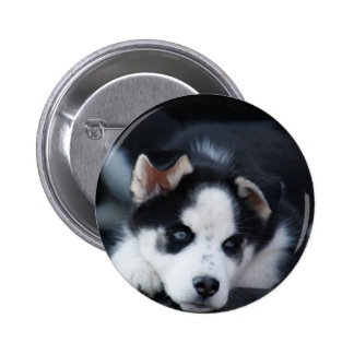 Alaskan Siberian Lop Eared Husky Sled Dog Puppy Buttons