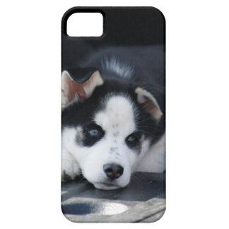 Alaskan Siberian Lop Eared Husky Sled Dog Puppy iPhone SE/5/5s Case