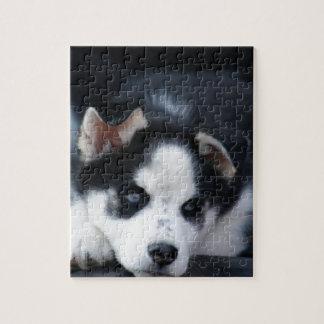 Alaskan Siberian Lop Eared Husky Sled Dog Puppy Jigsaw Puzzle