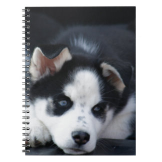 Alaskan Siberian Lop Eared Husky Sled Dog Puppy Spiral Note Books