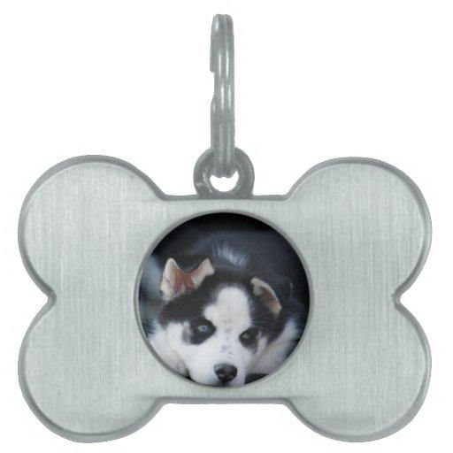 Alaskan Siberian Lop Eared Husky Sled Dog Puppy Pet Name Tag