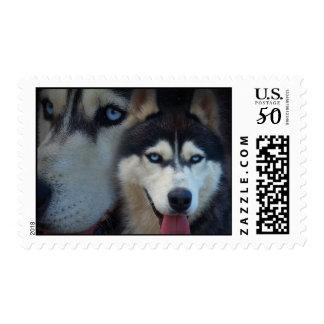 Alaskan sled dog - siberian husky postage
