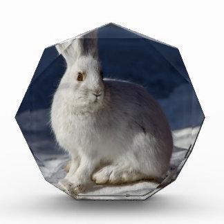 Alaskan Snowshoe Hare Acrylic Award