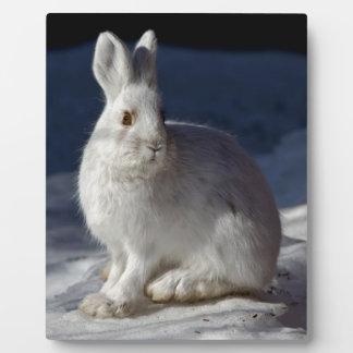 Alaskan Snowshoe Hare Plaque