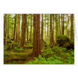Alaskan Temperate Rainforest Card