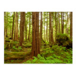 Alaskan Temperate Rainforest Postcard