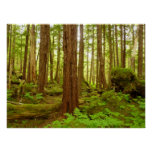 Alaskan Temperate Rainforest Poster