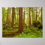 Alaskan Temperate Rainforest Poster