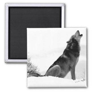 Alaskan Timber Wolf Refig Magnet