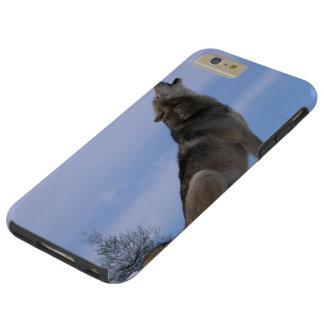 Alaskan Wild Timber Wolf Tough iPhone 6 Plus Case
