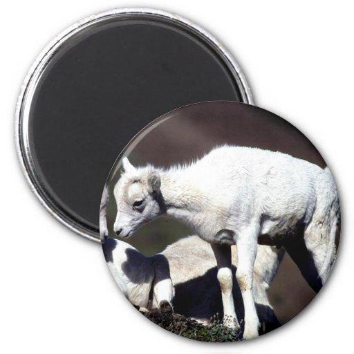 Alaskan Wildlife 2 Inch Round Magnet