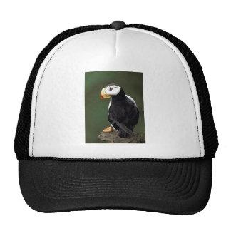 Alaskan Wildlife Mesh Hat
