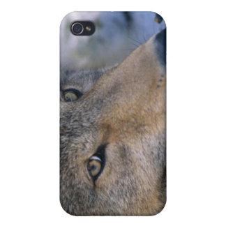 Alaskan Wildlife iPhone 4/4S Case