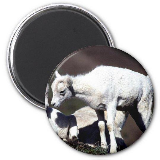 Alaskan Wildlife Magnet