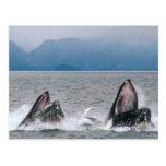 Alaskan Wildlife Post Card