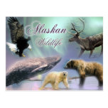 Alaskan Wildlife Post Cards