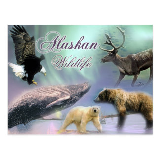 Alaskan Wildlife Postcard