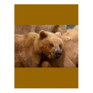 Alaskan Wildlife Postcard