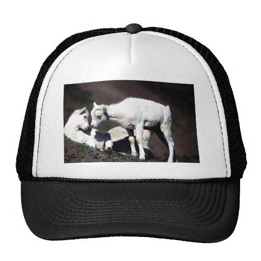 Alaskan Wildlife Trucker Hat