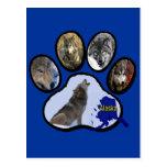 Alaskan Wolf Paw Print Postcard