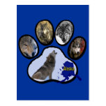 Alaskan Wolf Paw Print Postcards