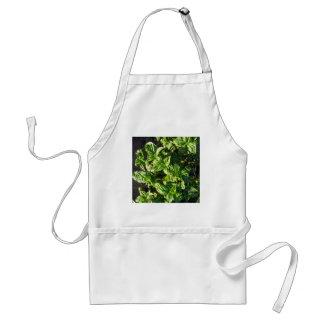 Albahaca cultivada en campo abierto delantal