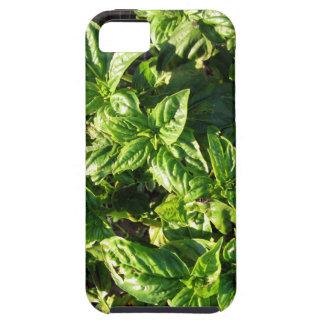 Albahaca cultivada en campo abierto iPhone 5 funda