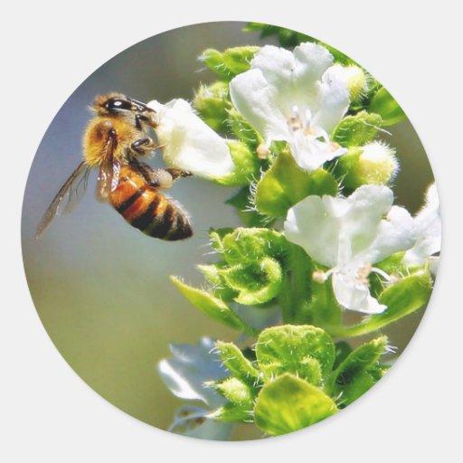 Albahaca de Pollenating de las abejas Pegatina Redonda