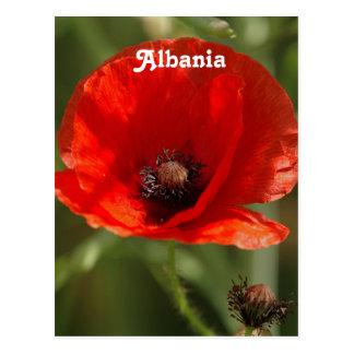 Albania Poppy Postcard