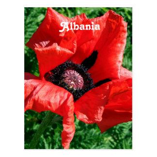 Albanian Red Poppy Postcard